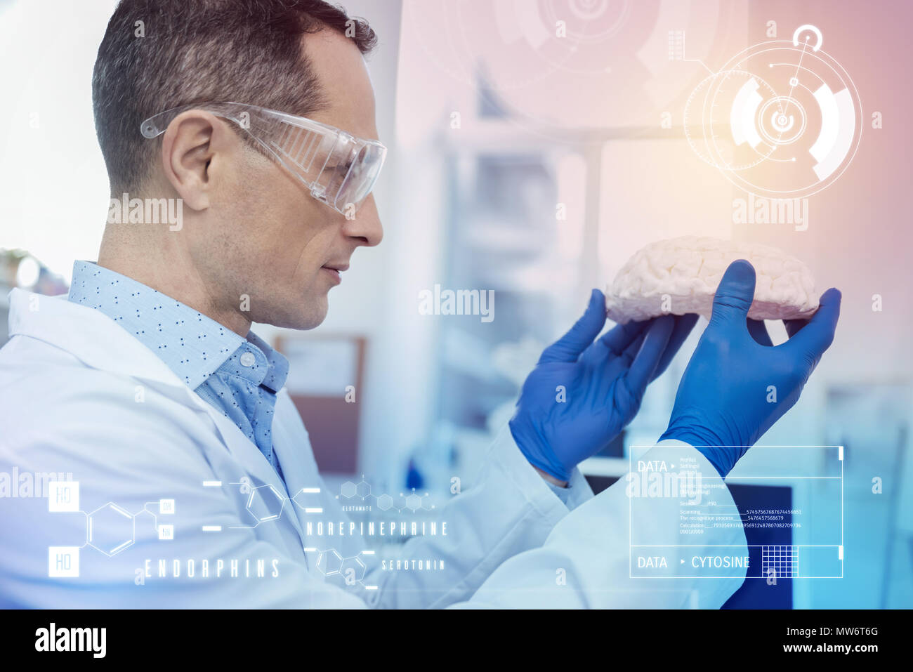 Careful biologist wearing protective glasses and looking at the model of brain - Stock Image