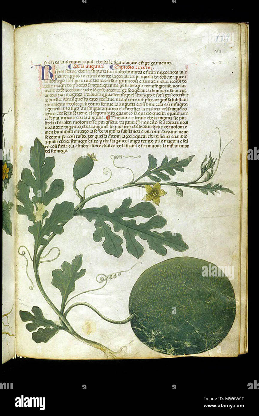 . English: Serapion the Younger, Translation of the herbal (The 'Carrara Herbal'), including the Liber agrega, Herbolario volgare; De medicamentis, with index (ff. 263-265) Italy, N. (Padua); between c. 1390 and 1404 . between c. 1390 and 1404. An Italian translation, possibly from a Latin translation, of a treatise orginally written in Arabic by Serapion the Younger (Ibn Sarabi, likely 12th century). 115 Carrara Herbal21 - Stock Image