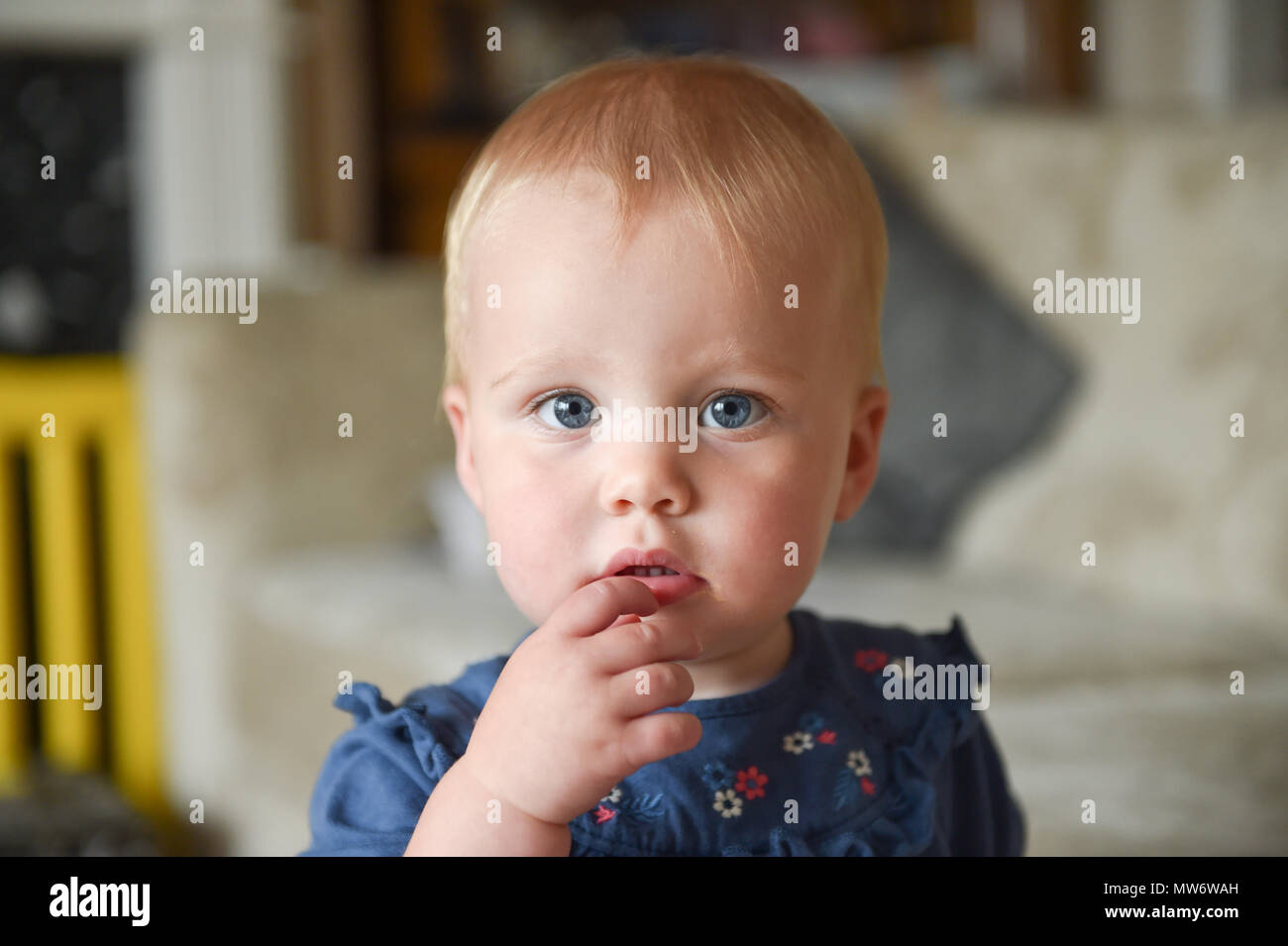 7fe64c739 Beautiful Young baby girl toddler at 18 months old with short blonde hair -  model released