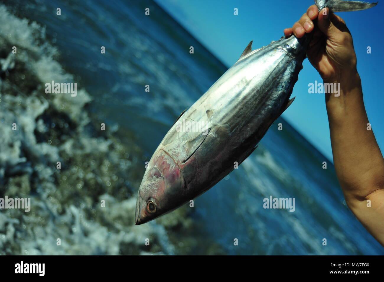 Fischfang, Pazifischer Ozean, Baler, Philippinen - Stock Image