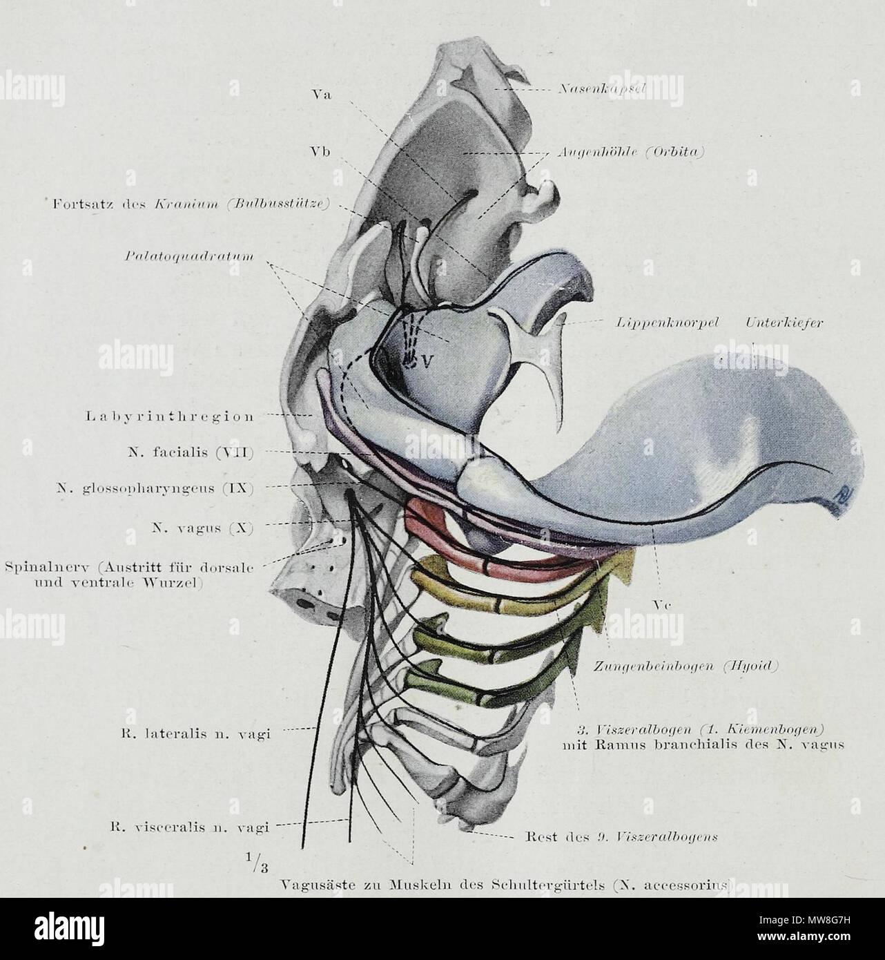 Beste Hirnventrikeln Anatomie Ideen - Menschliche Anatomie Bilder ...