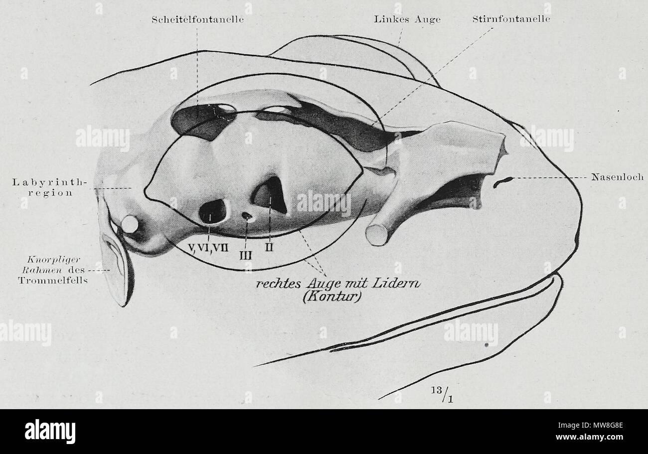 Wunderbar Studieren Anatomie Online Ideen - Physiologie Von ...