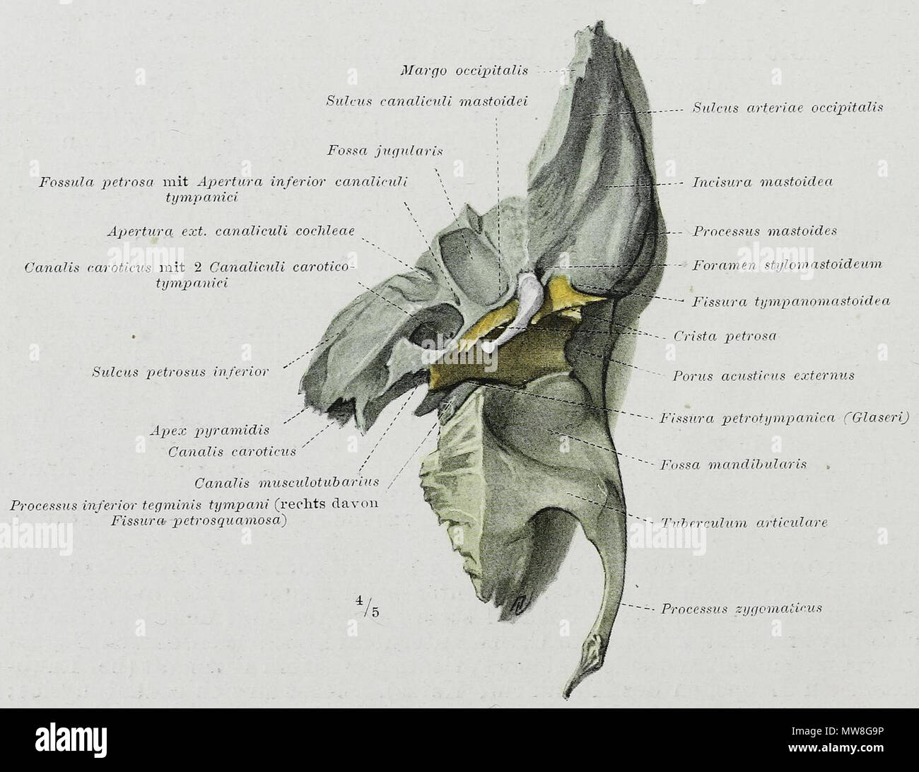 Gemütlich Anatomie Des Menschen Fragen Und Antworten Zeitgenössisch ...