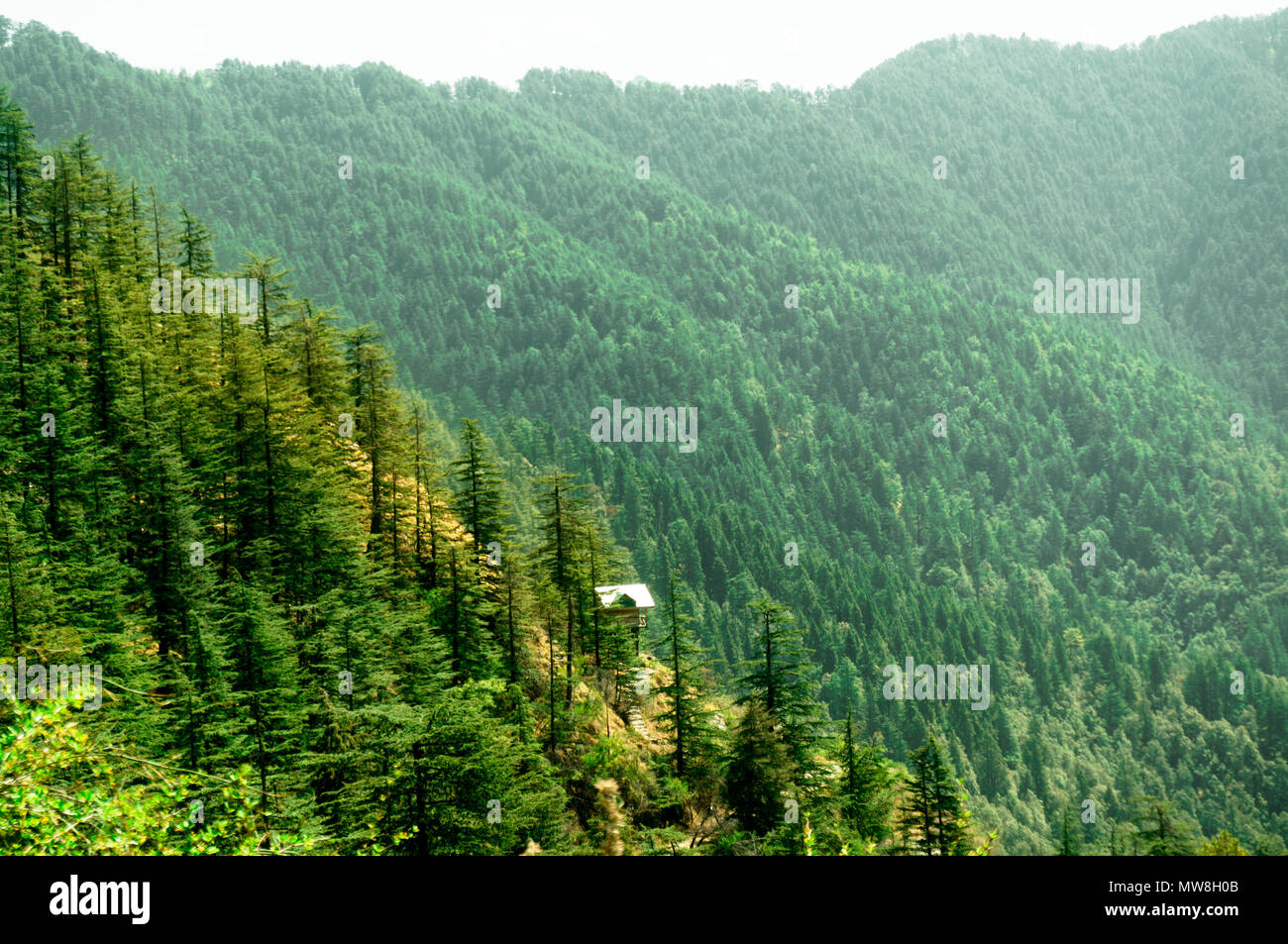 Himalayan range covered with trees fading off into the distance and covered with pine trees. Himachal pradesh has many such sights which makes it a tourist favorite for summer vacations - Stock Image