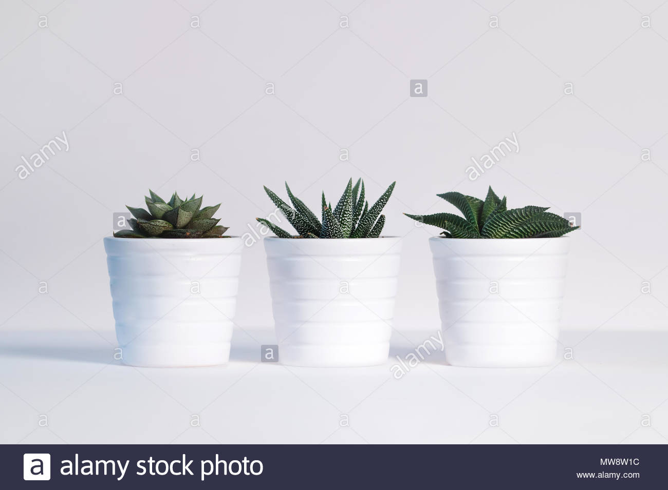 Three White Flower Pots With Small Green Plants Succulents On A