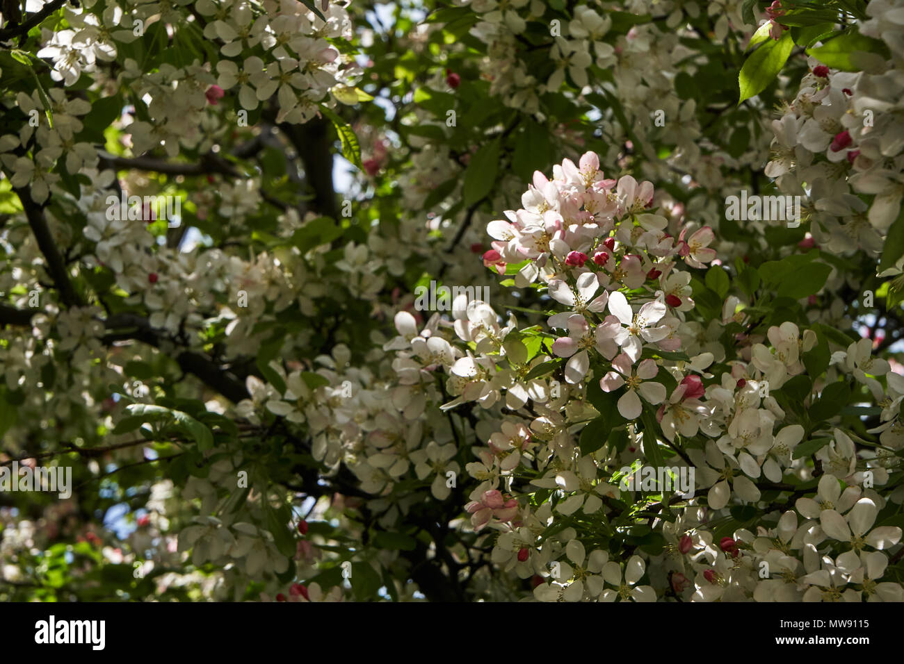 Dainty Pink Flowers Stock Photos Dainty Pink Flowers Stock Images
