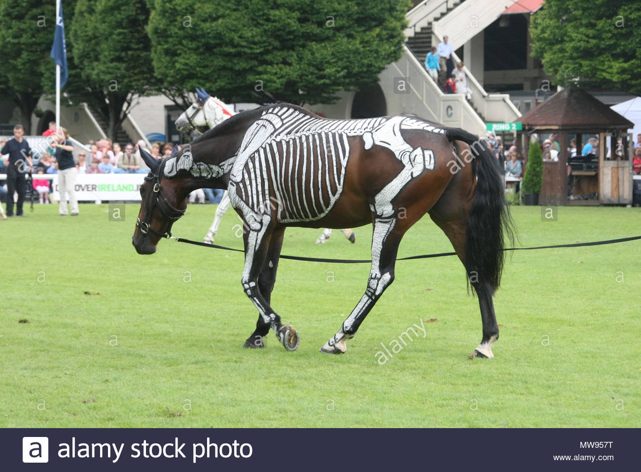 Coloured horses at The RDS Horse show in Dublin, Ireland, showing ...