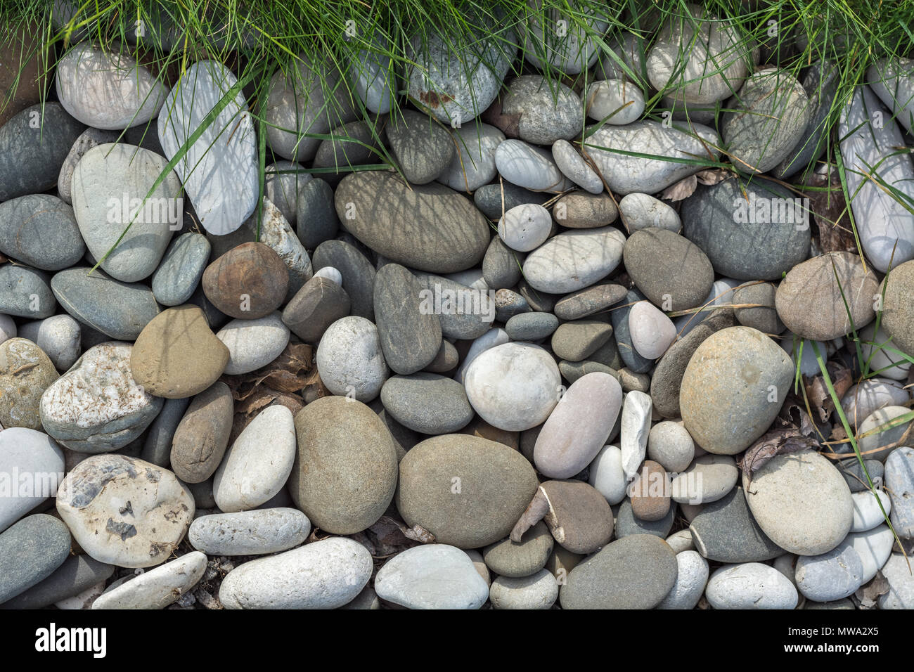 The image of river pebbles of various shapes and sizes with green grass from above, for use as a background. - Stock Image