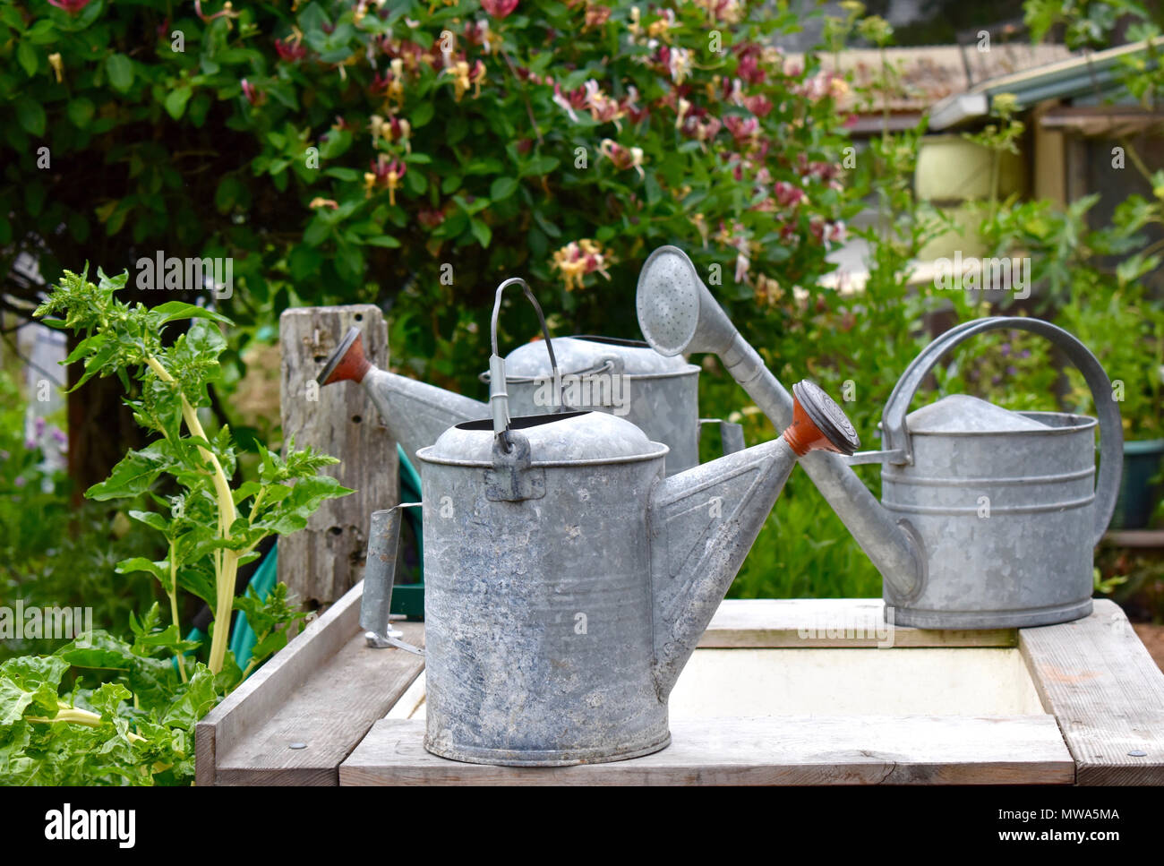Collection of Watering Cans in a Community Garden - Stock Image