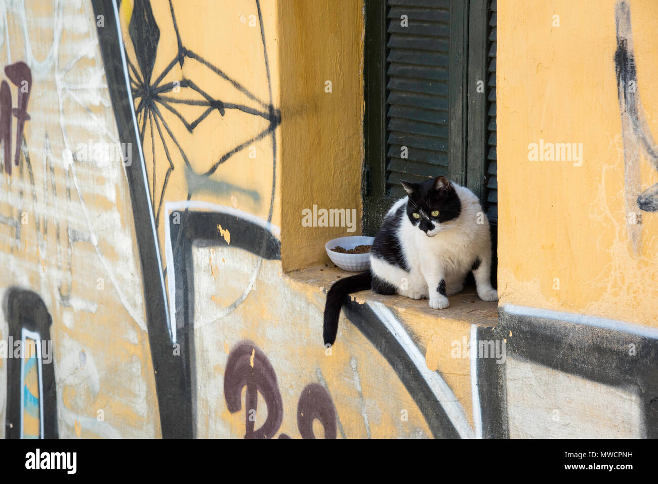 Cat in a window in the Plaka neighborhood of Athens, Greece - Stock Image