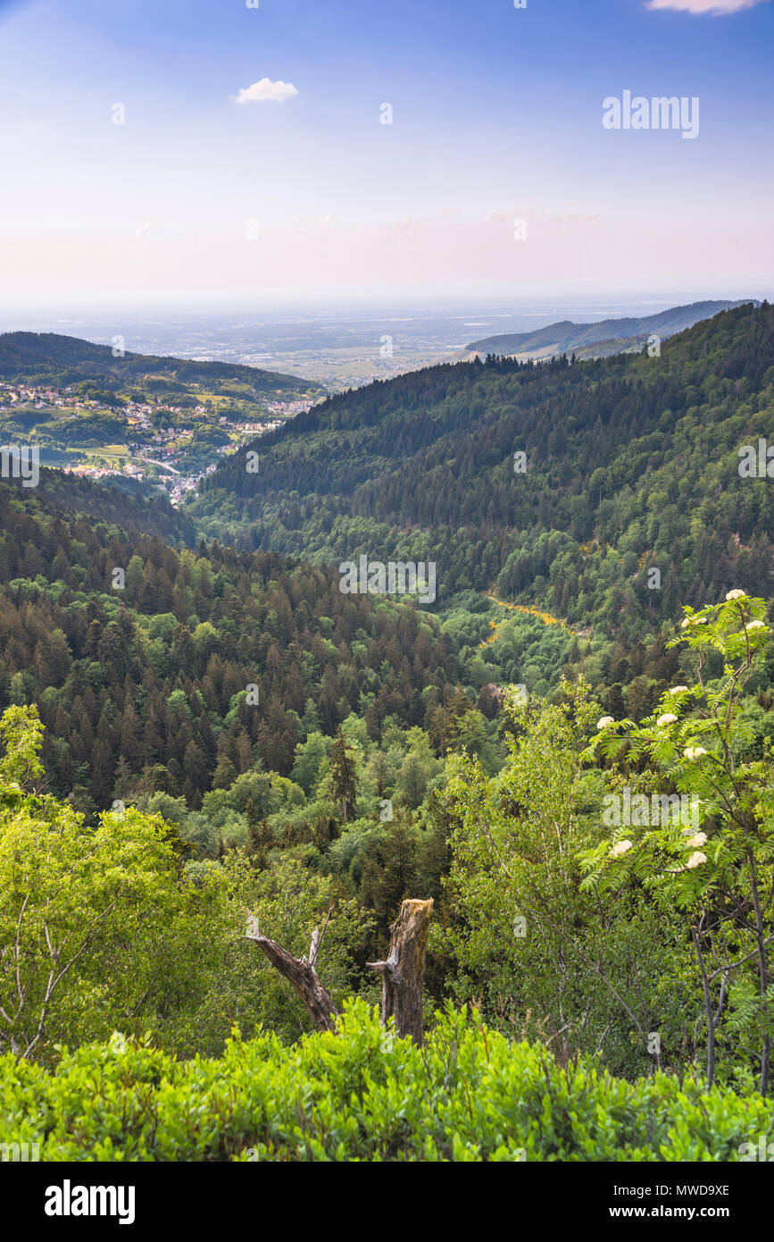 viewpoint Wiedenfelsen at the border of the Black Forest, Germany, crests of Black Forest mountains and valley of Bühlertal - Stock Image