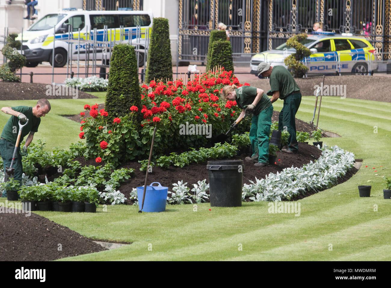 London Uk 1st June 2018 Gardeners Plant Red Geranium Flowers In