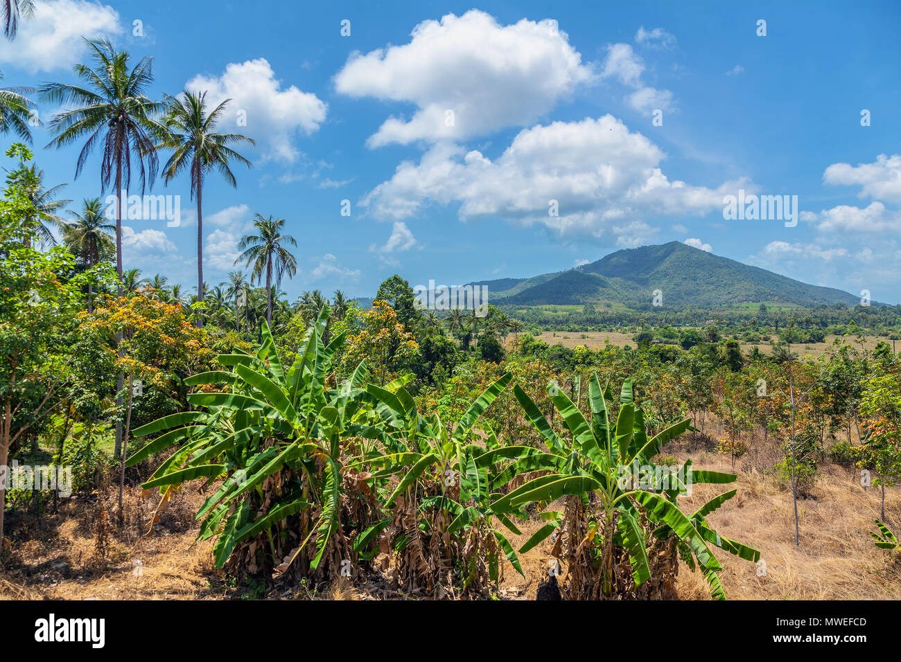 Panorama of Koh Samui. Thailand. - Stock Image