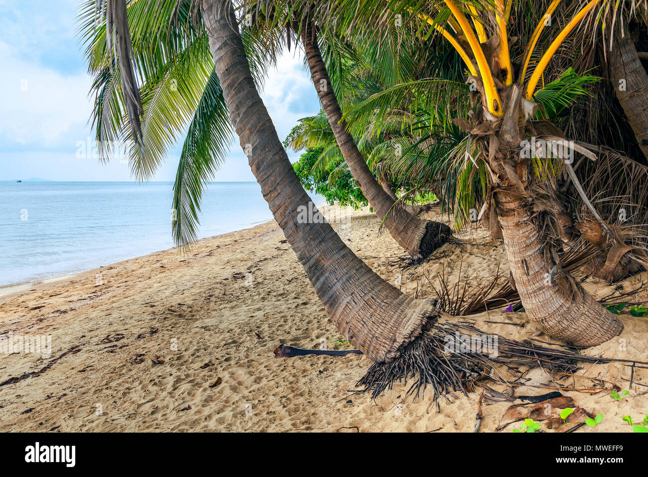 Coconut island of Koh Samui in Thailand. - Stock Image