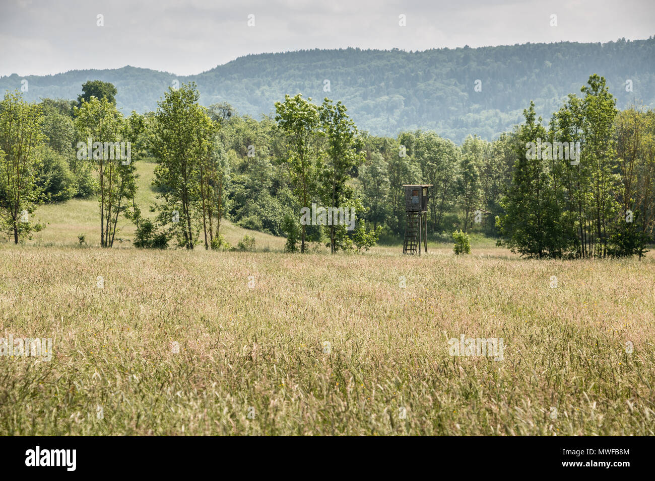 German countryside with forests, fields and meadows - Stock Image