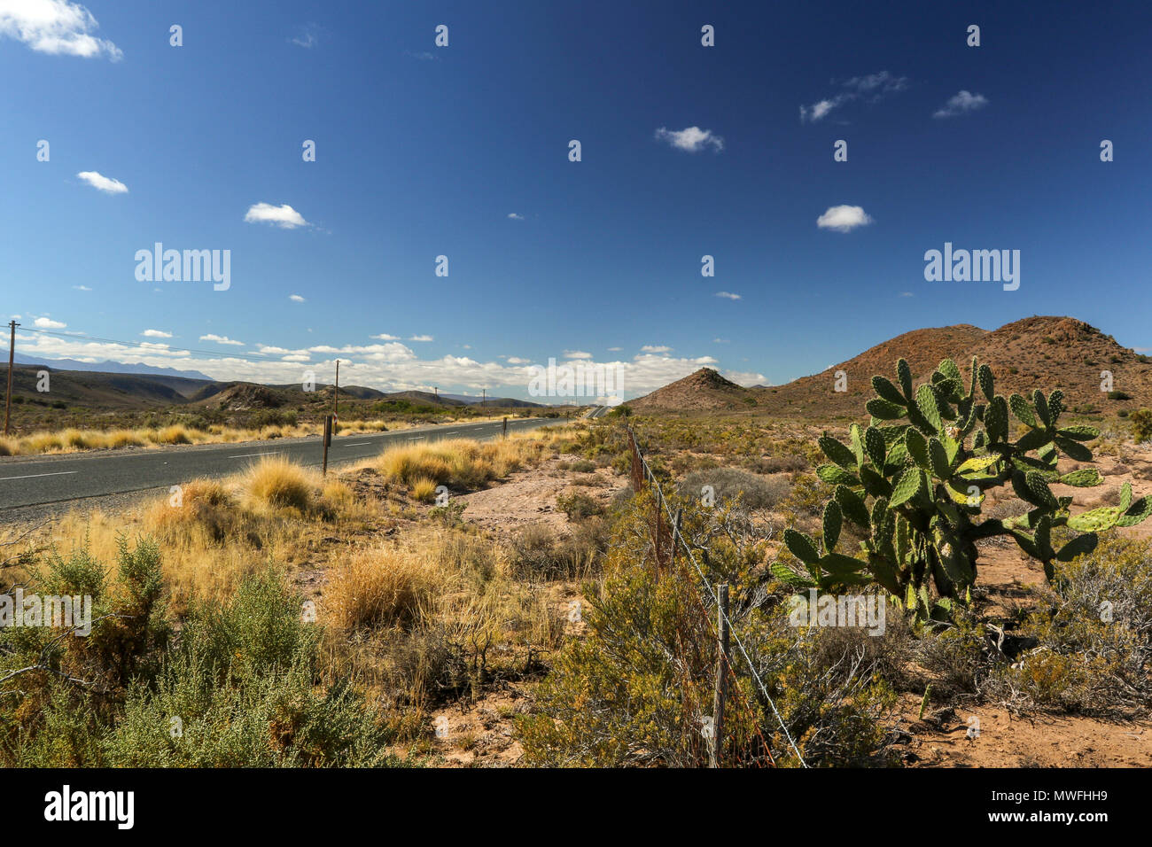 Cactus and fynbos in the landscape along the garden route, south africa - Stock Image