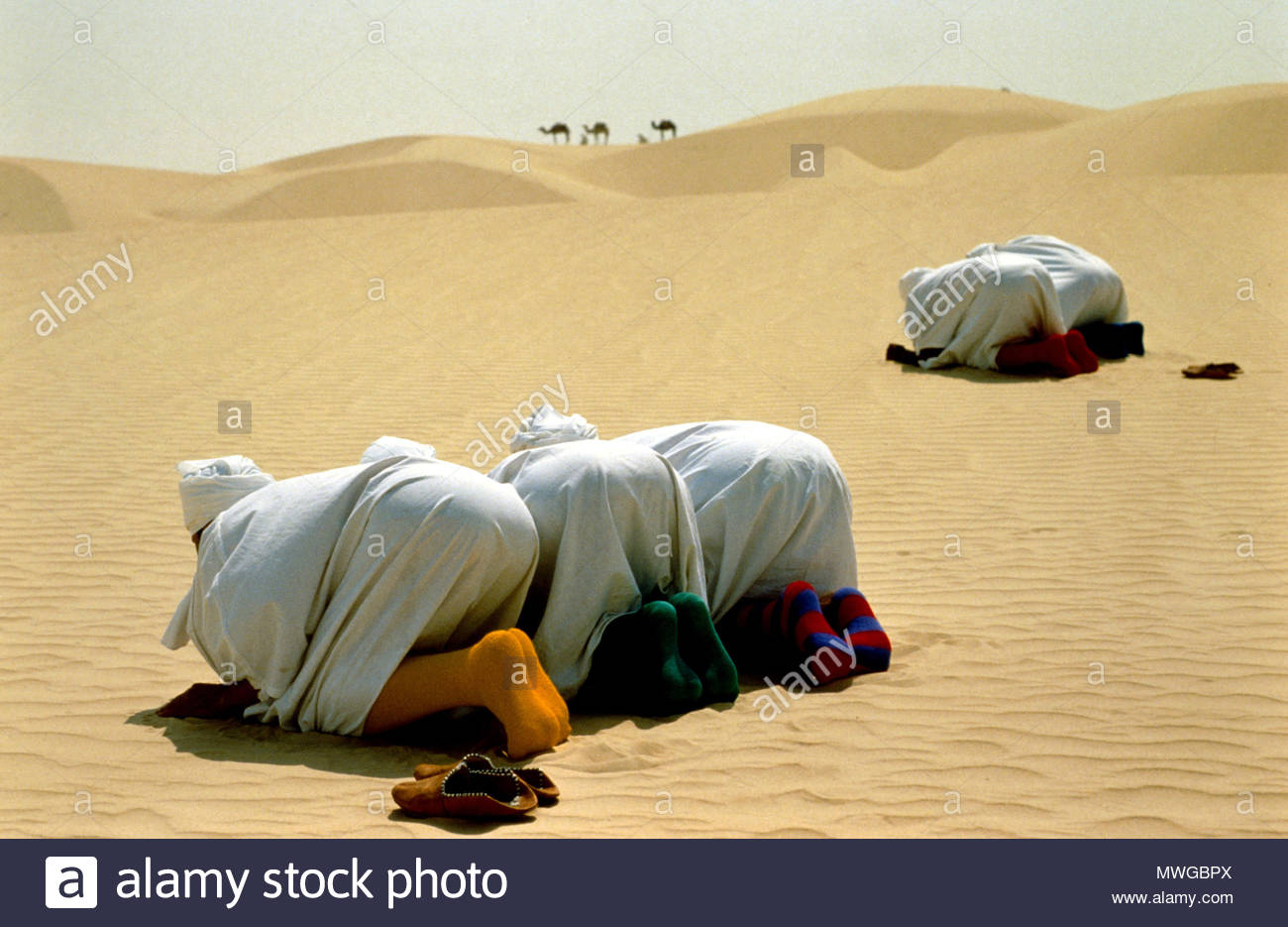 Moslems praying in desert, camels in distance. - Stock Image