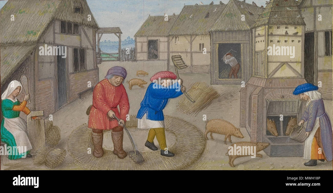 . English: Crop of [[ File:Workshop of the Master of James IV of Scotland (Flemish, before 1465 - about 1541) - Threshing and Pig Feeding; Zodiacal Sign of Sagittarius - Google Art Project.jpg]] . 7 July 2013, 23:06:28. Workshop of the Master of James IV of Scotland 405 MasterofJamesIVThreshing&PigFeeding - Stock Image