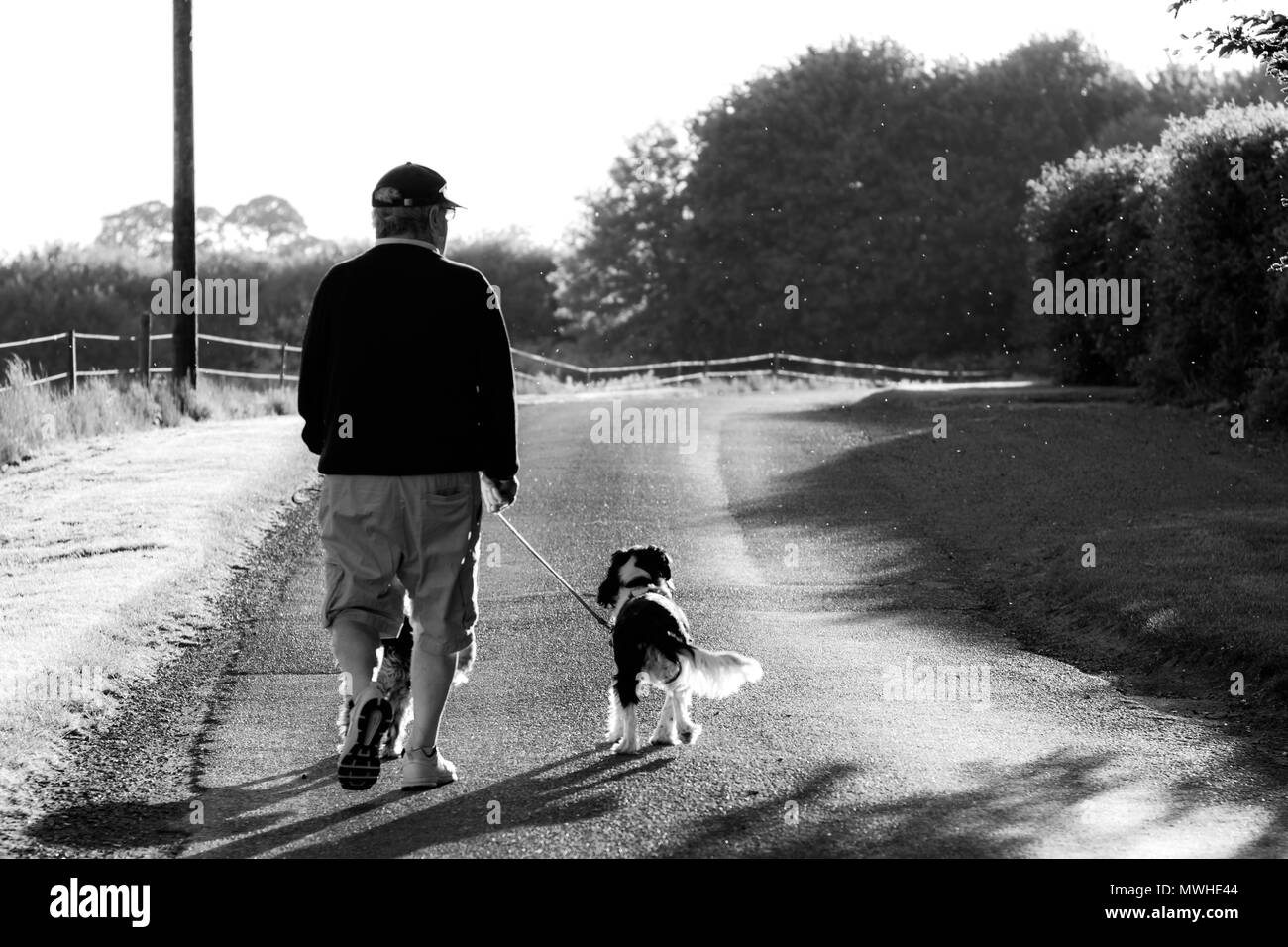 An elderly man walking his dogs in black and white - Stock Image