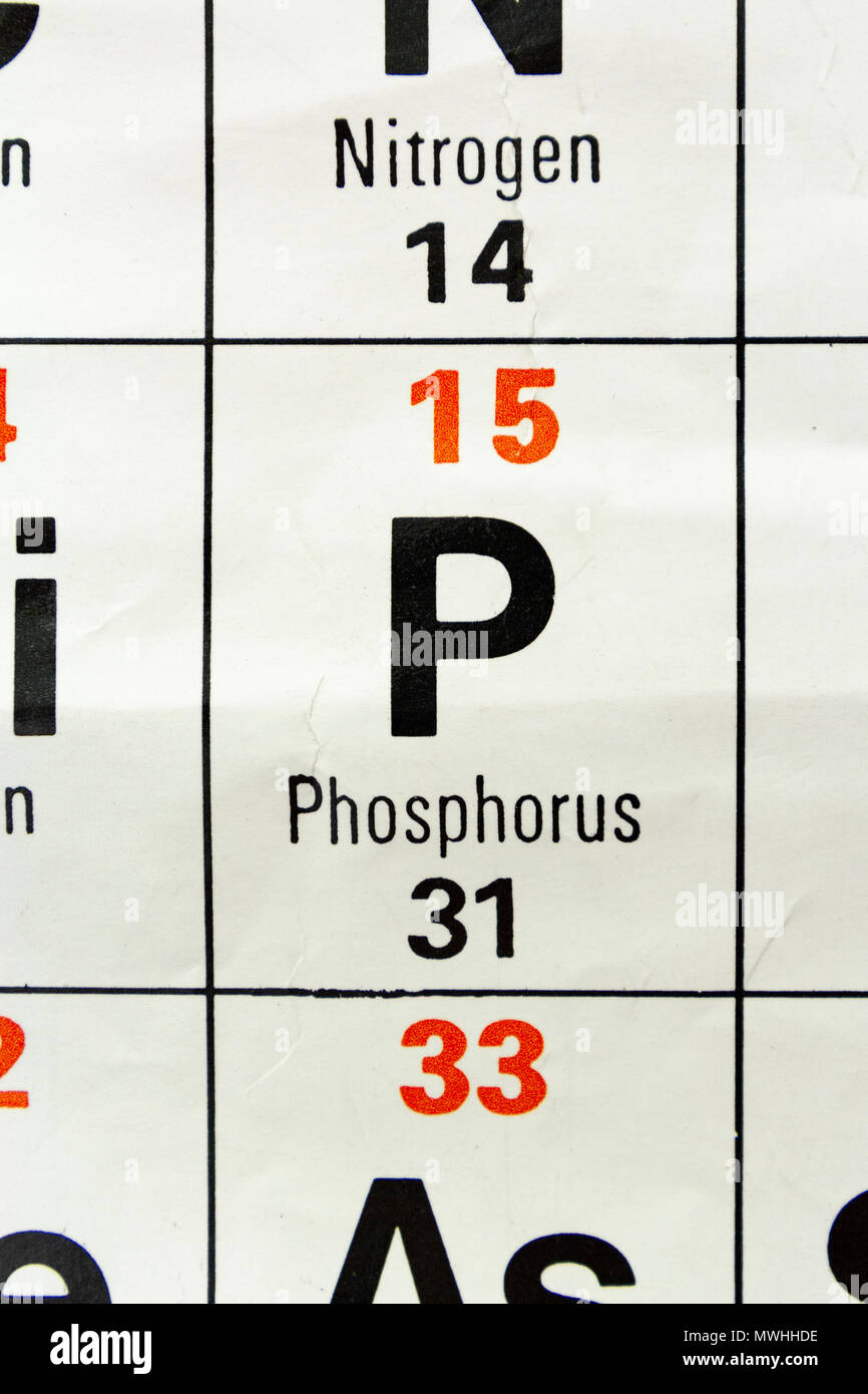 Phosphorus (P) as it appears a UK Secondary school Periodic Table. - Stock Image