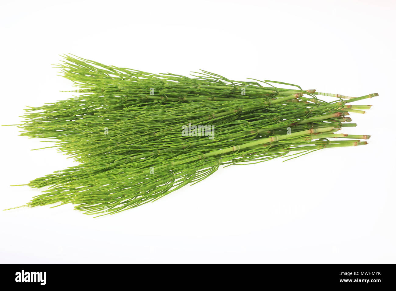 Horsetail in folk and traditional medicine 48