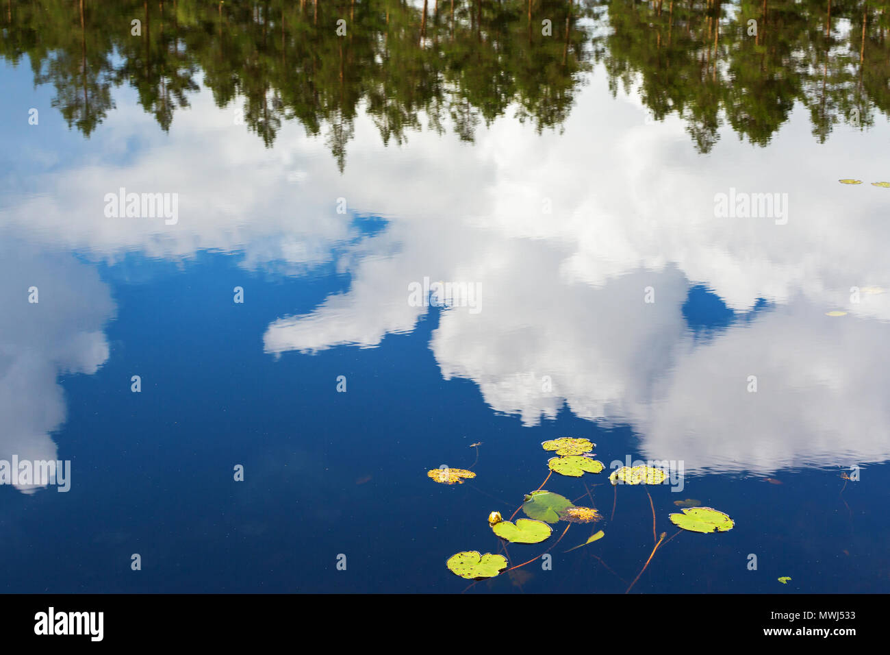 Lily leaf and reflections of clouds in the water - Stock Image