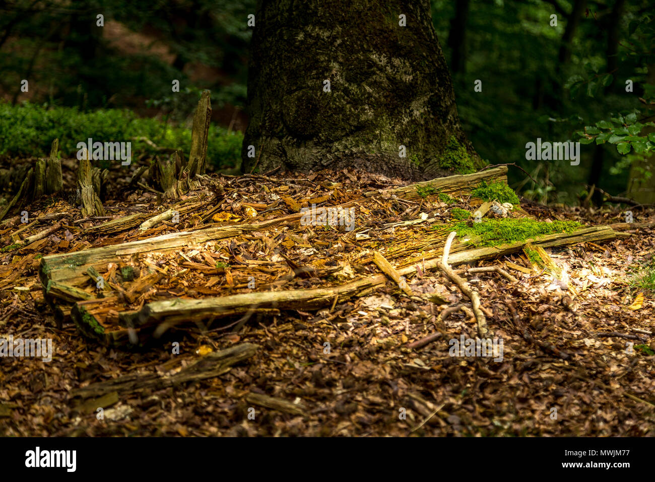 In the wood - Stock Image