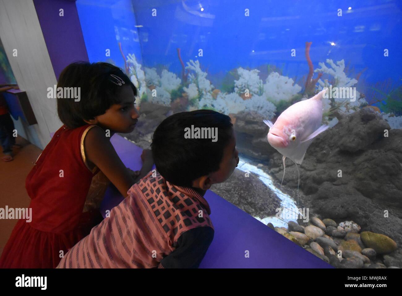 Fish Museums Stock Photos & Fish Museums Stock Images - Alamy