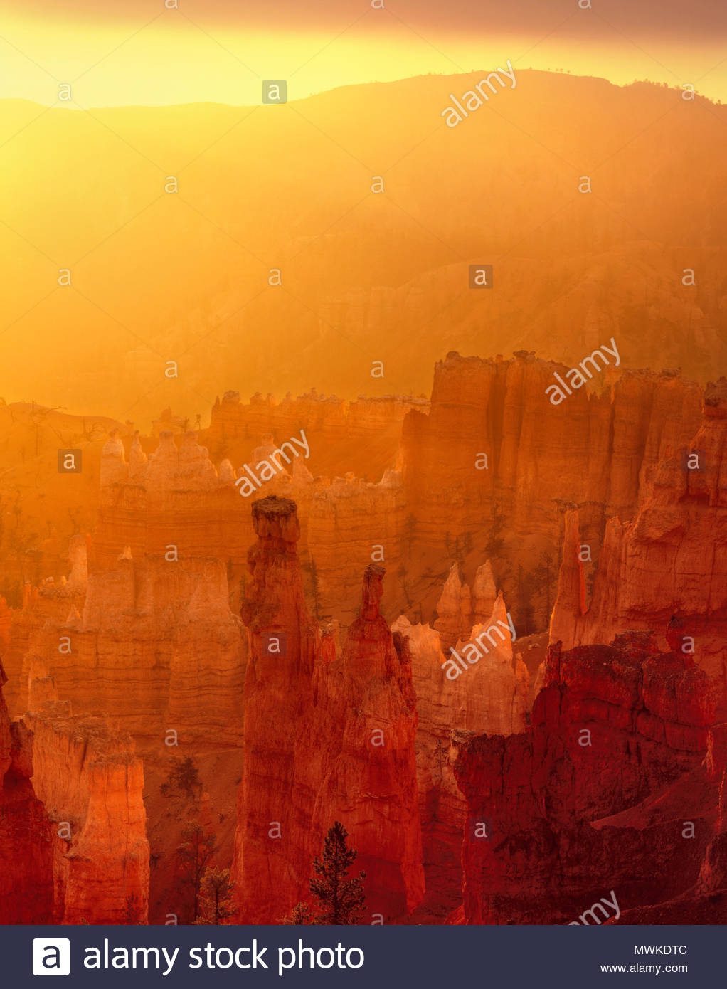 Dawn with Golden Light, Bryce Canyon National Park, Utah - Stock Image