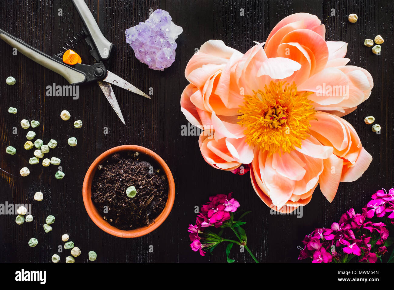 Gardening Accessories with Flowers, Seeds, Scissors and Amethyst - Stock Image