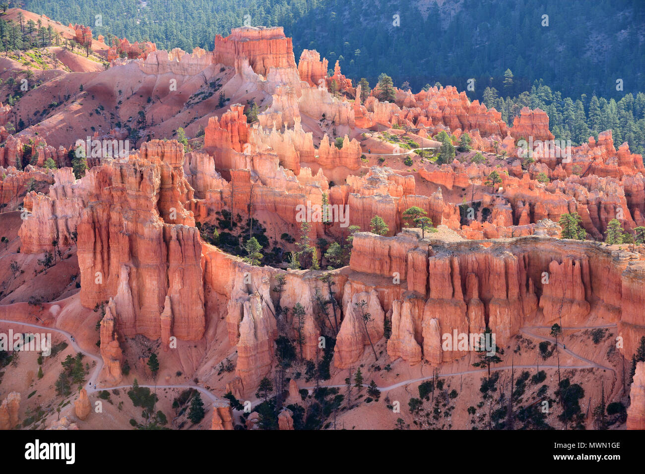A trail among the hoodoos in Bryce Canyon National Park, Utah, USA - Stock Image
