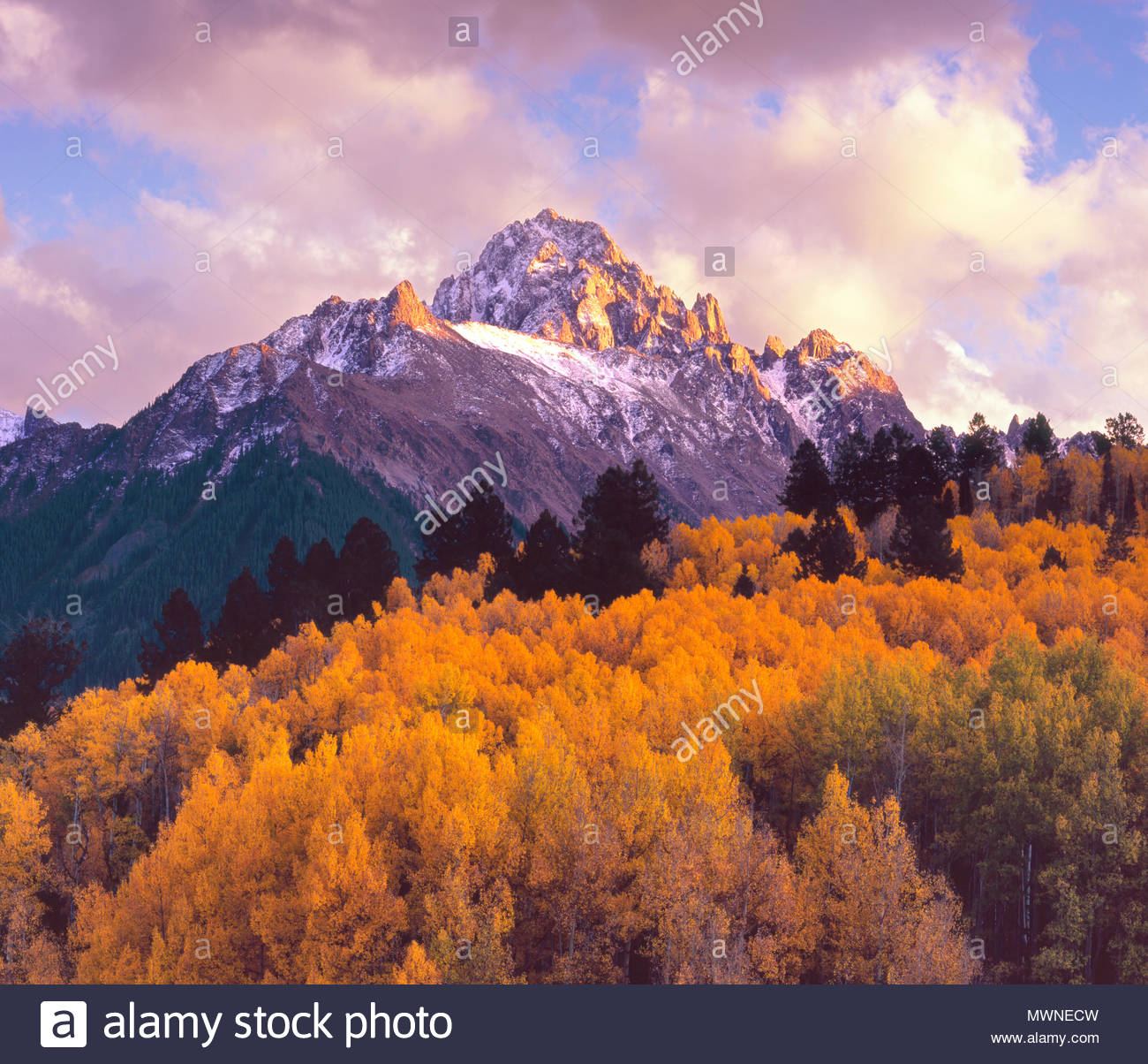 Mount Sneffels and Aspen at Sunset, Uncompahgre National Forest, Colorado - Stock Image