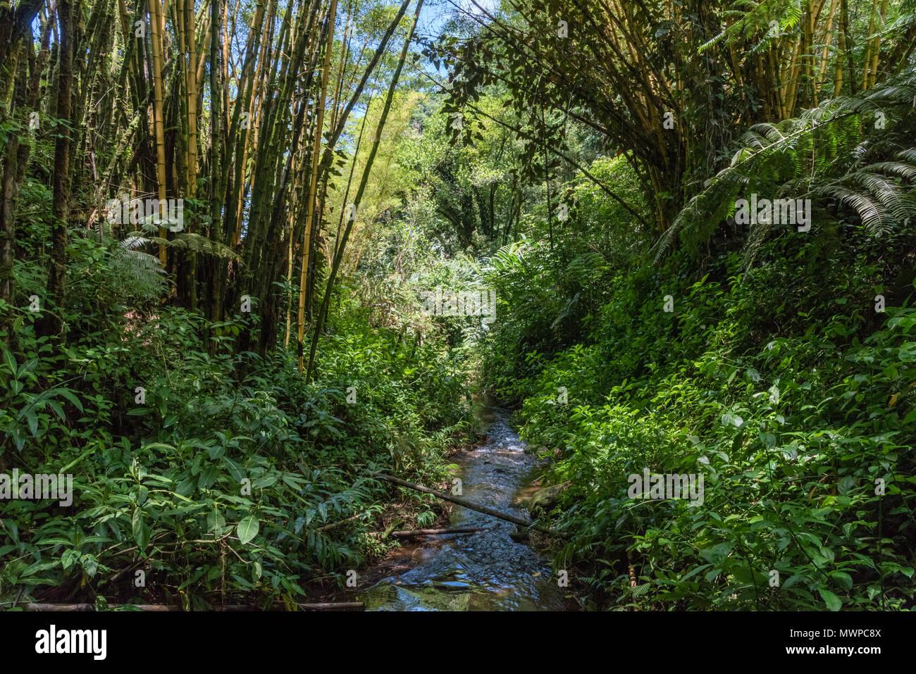 Rainforest On The Big Island: Tree Shade Rainforest Stock Photos & Tree Shade Rainforest