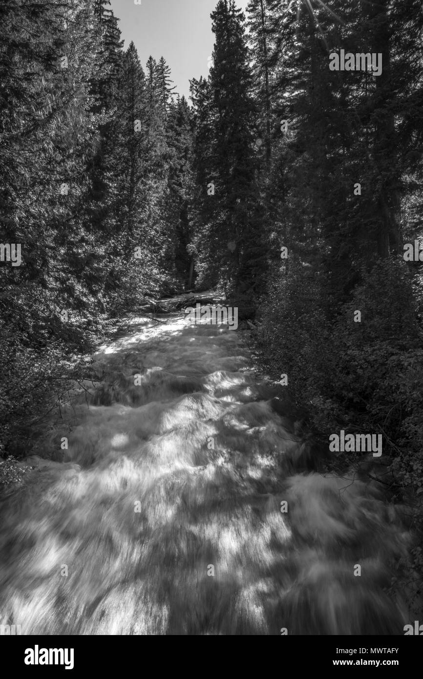 Early Winters Creek Running Through the Forest - Stock Image