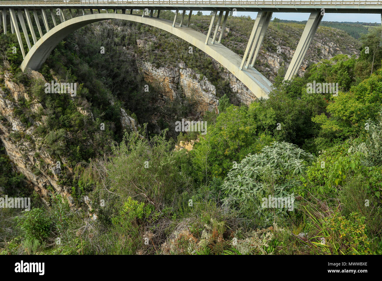 South African fynbos under the Paul Sauer Bridge, Nature's Valley, Western Cape, in the Tsitsikamma protected area on the Garden Route, South Africa Stock Photo