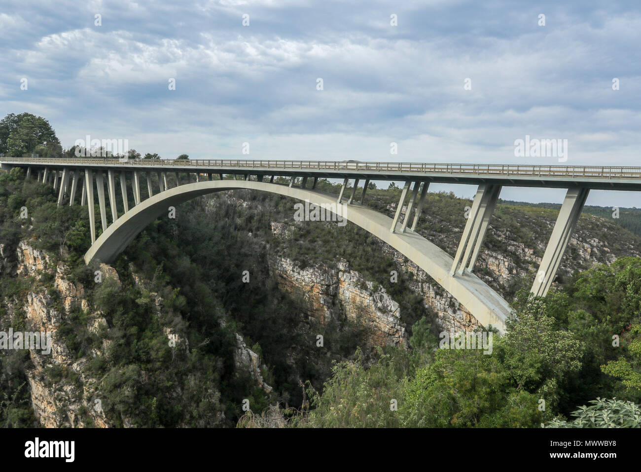 South African fynbos under the Paul Sauer Bridge, Nature's Valley, Western Cape, in the Tsitsikamma protected area on the Garden Route, South Africa - Stock Image