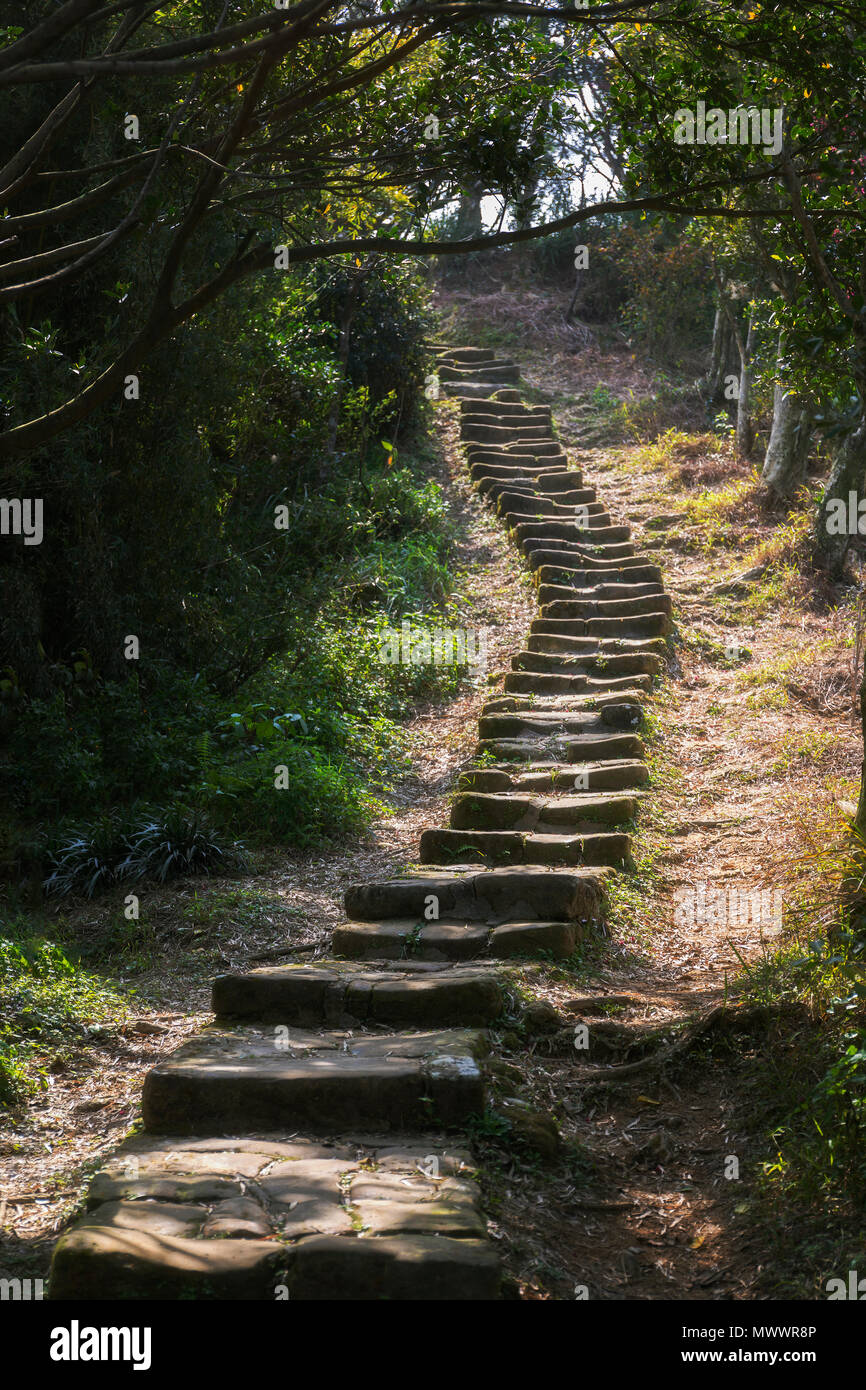 A forested rock path leading toward an opening in the distance - Stock Image