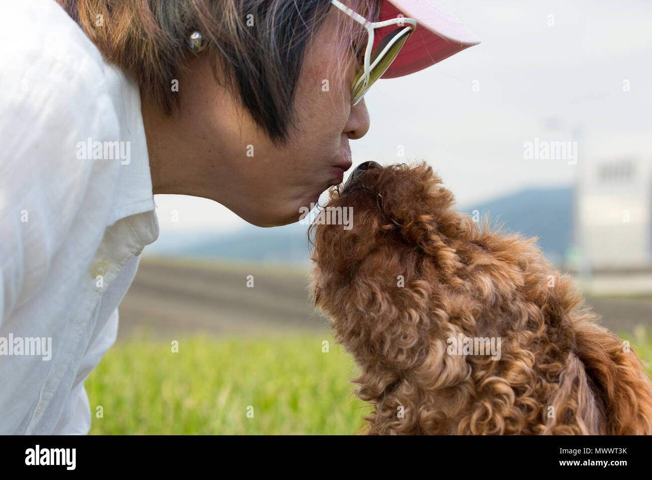 Close up of chocolate brown poodle giving its owner, a Taiwanese woman of Chinese descent, a kiss - Stock Image