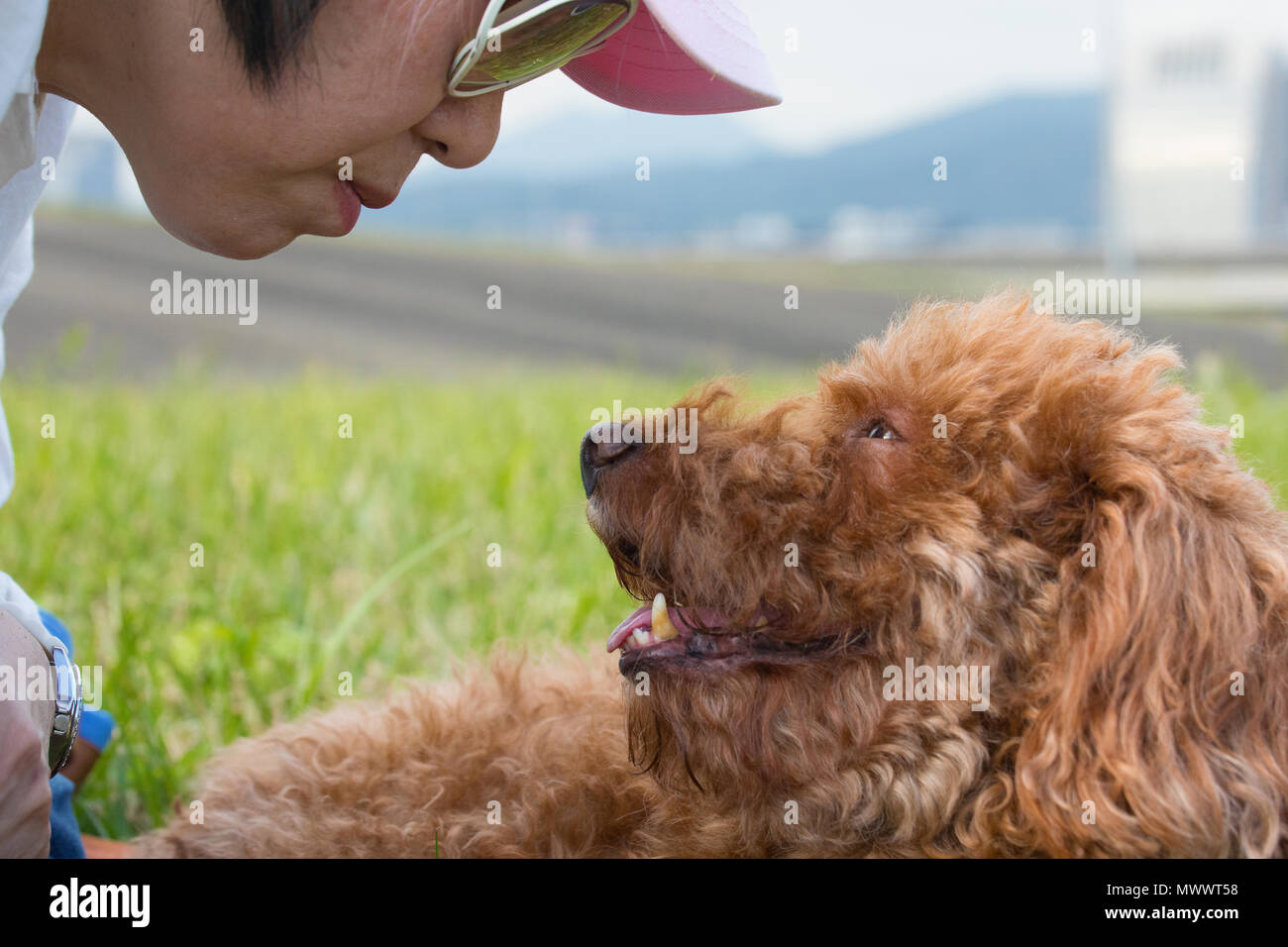 Close up of Taiwanese woman of Chinese descent and chocolate brown poodle looking into each others eyes Stock Photo