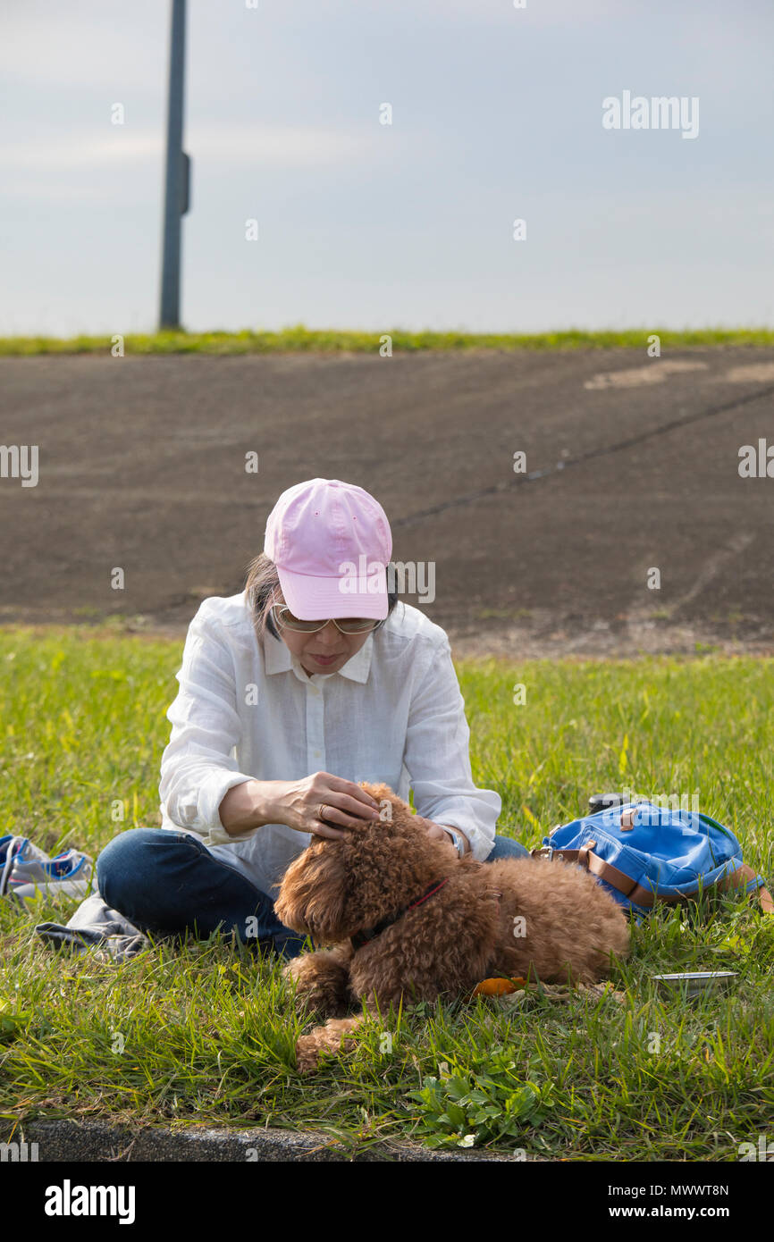 A woman sitting on a grass lawn caring for her chocolate-brown poddle pet dog - Stock Image