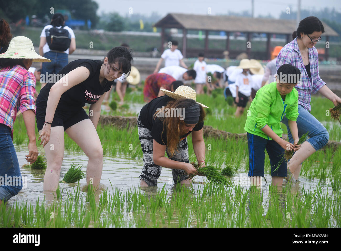 Hangzhou, China's Zhejiang Province. 2nd June, 2018. People participate in a rice transplanting game in Hongqi Village of Hangzhou, east China's Zhejiang Province, June 2, 2018. The game was organized to evoke people's memory of traditional farming customs and promote local tourism. Credit: Xu Yu/Xinhua/Alamy Live News - Stock Image
