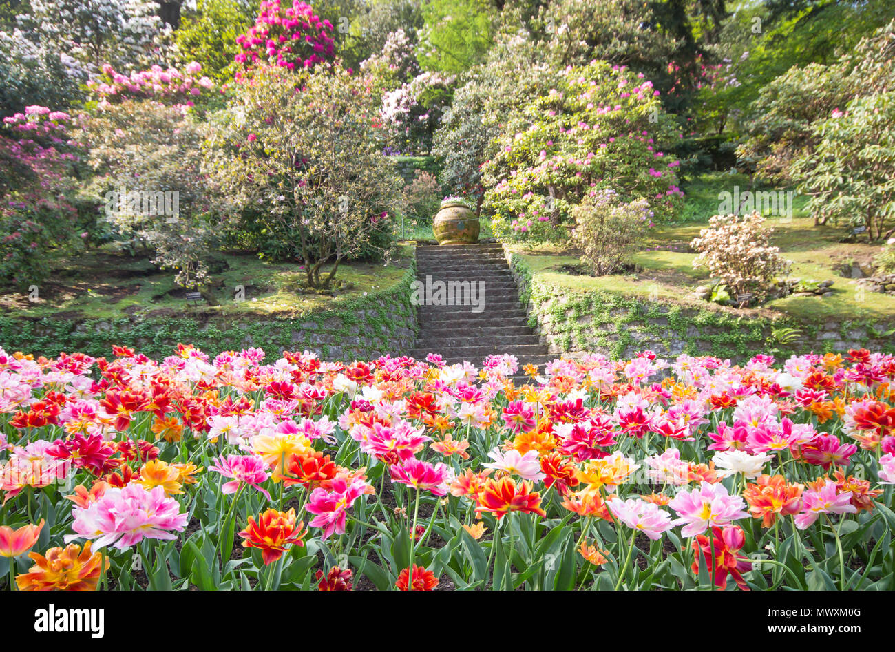 Colorful Tulips Park In The Field Beautiful Flowers Bloom In Spring