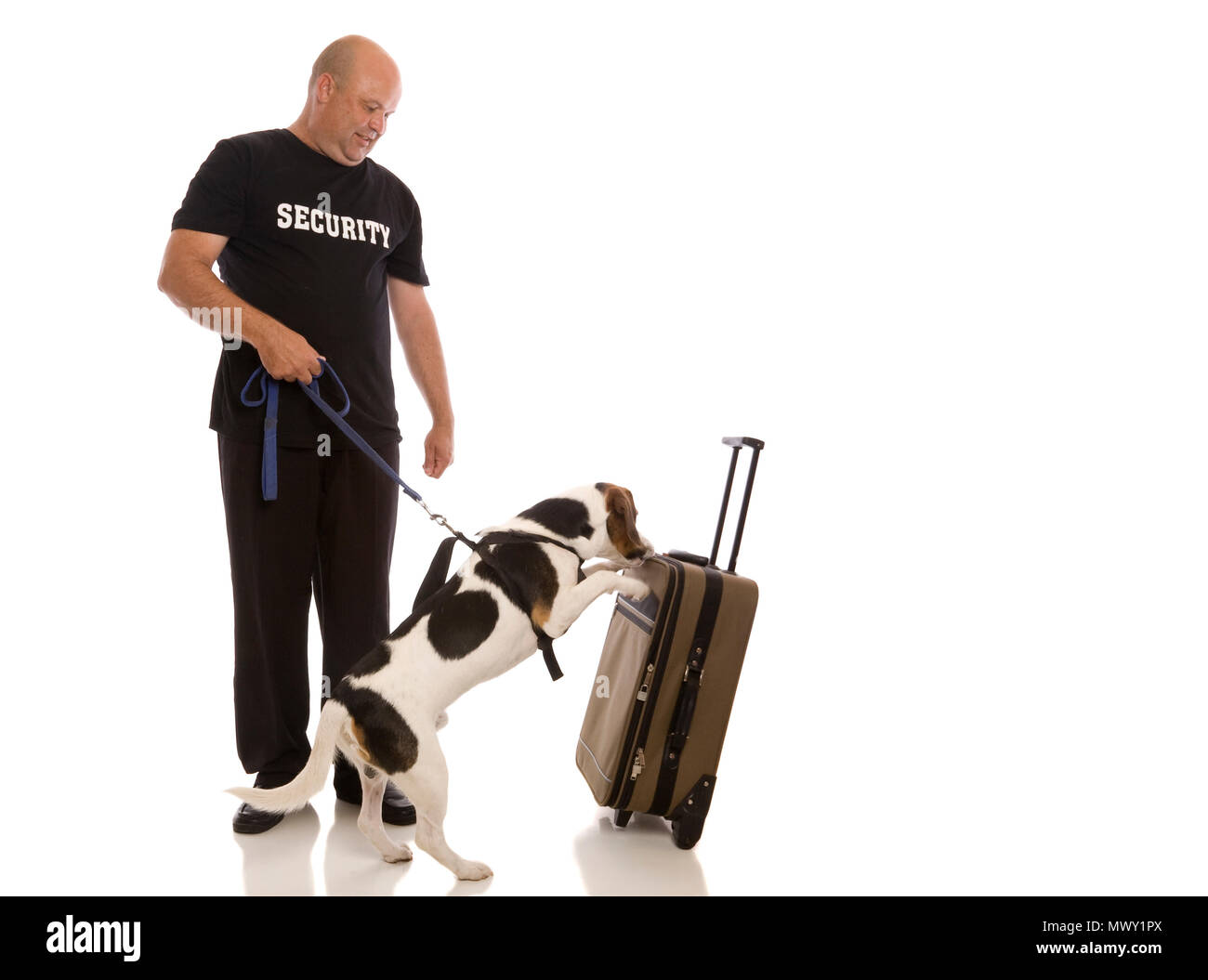 A sniffer dog showing interest in a bag, possibly containing illegal substances or explosives. - Stock Image