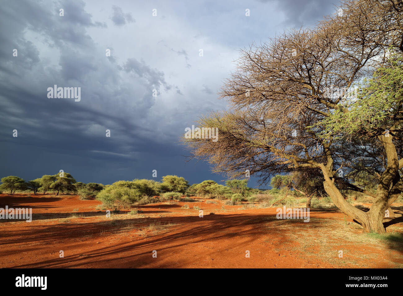 African savannah landscape against a dark sky of an approaching storm, South Africa Stock Photo