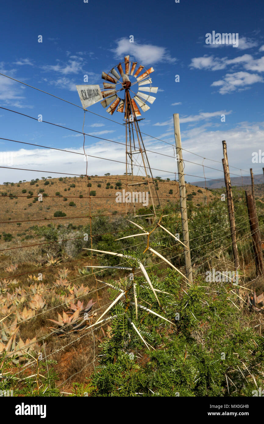 Multi-bladed windpump acacia and eastern cape fynbos in the landscape. The Addo Elephant National Park, eastern cape, south Africa - Stock Image
