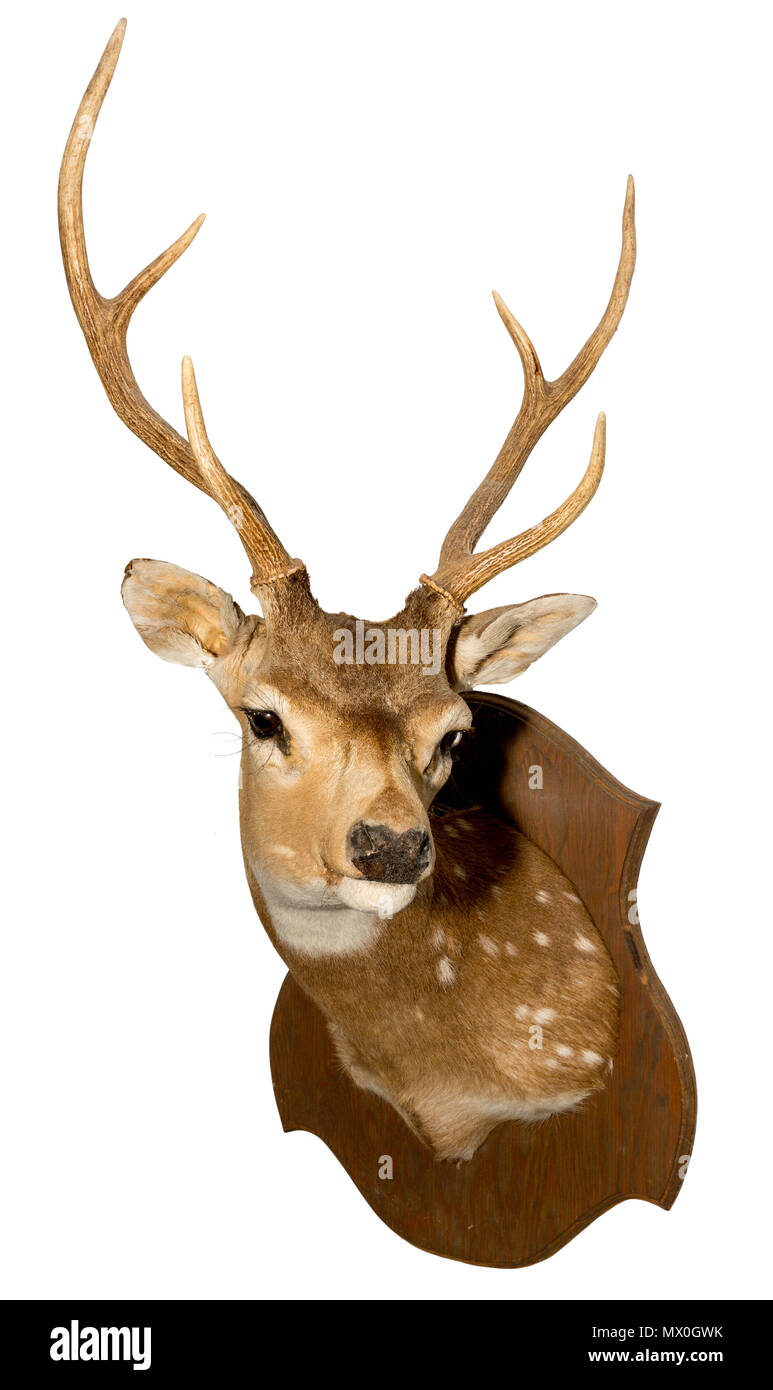 Deer Hunting Cut Out Stock Images & Pictures - Alamy