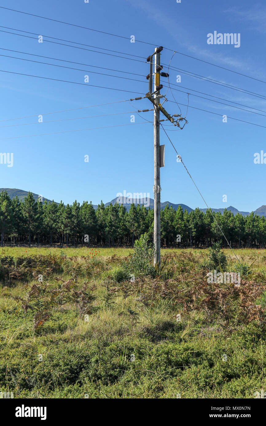 Telegraph pole and wire in the landscape near   Tsitsikamma National Park, Garden Route, Cape, South Africa, - Stock Image