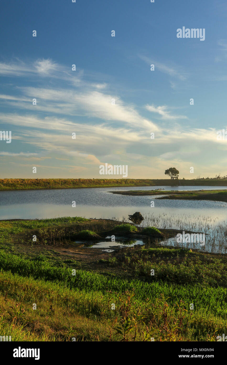 Misty mountain reservoir and lone tree in the landscape of Tsitsikamma, protected area, Garden Route, Cape, South Africa - Stock Image
