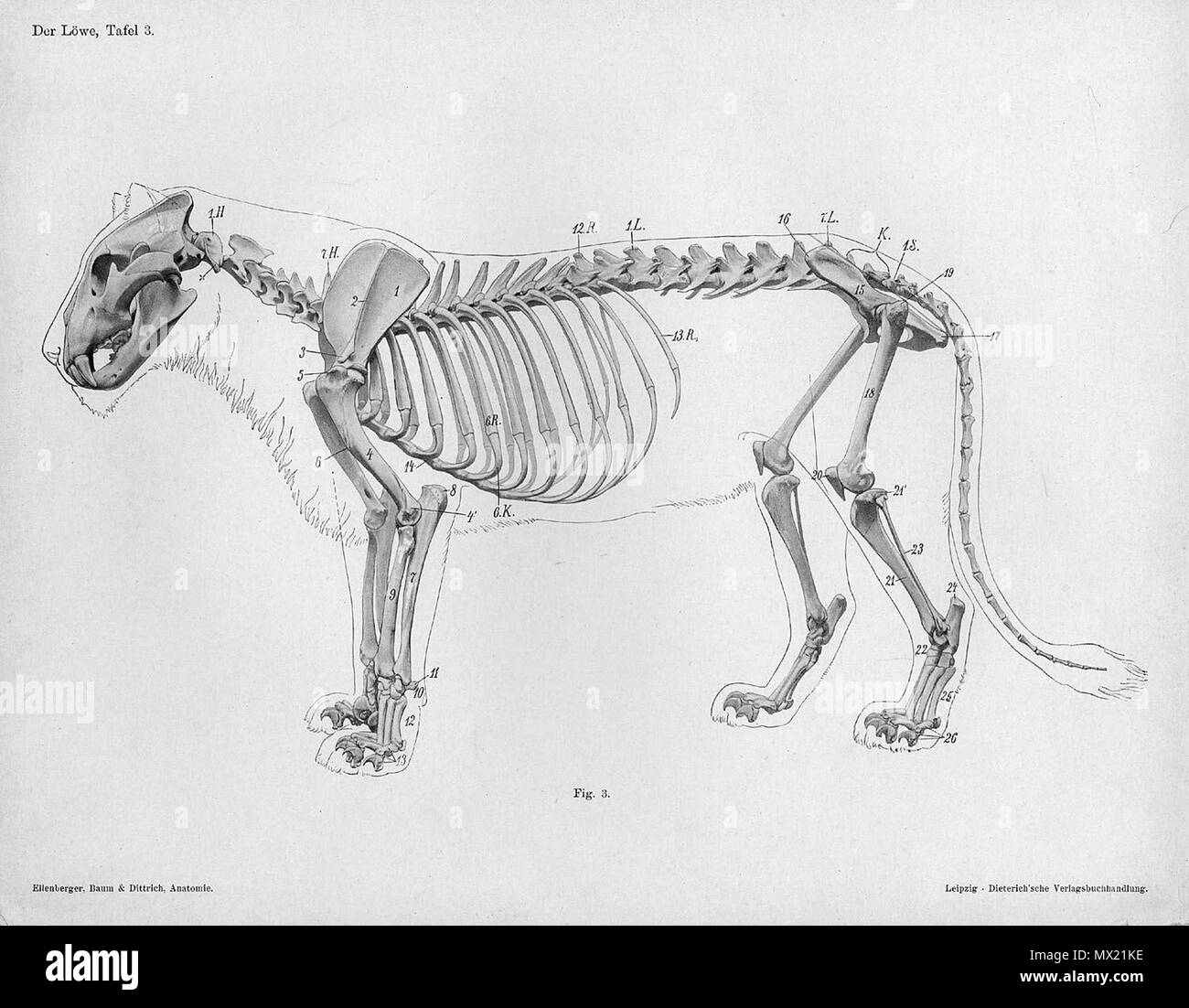 Großzügig Anatomie Der Unterarmknochen Galerie - Physiologie Von ...