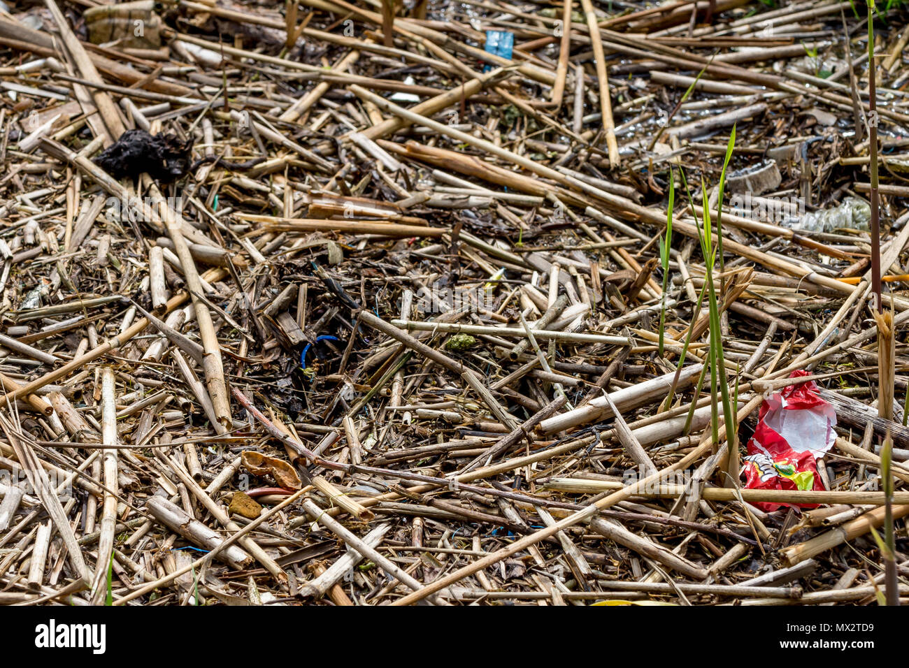 Plastic litter pollution washed up amongst the redeemed debris on the shore of Oulton Broad, Lowestoft, Suffolk - Stock Image